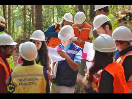 Se requiere ingeniero forestal Junior