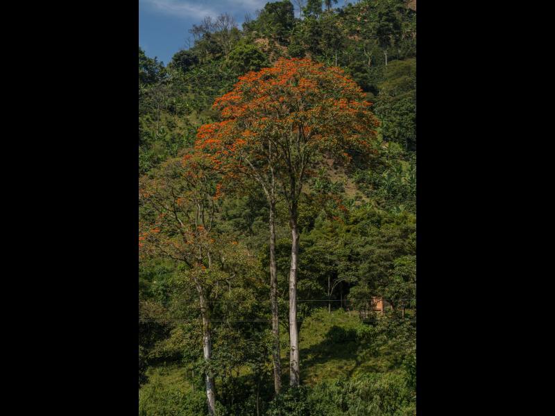 Venta de árboles