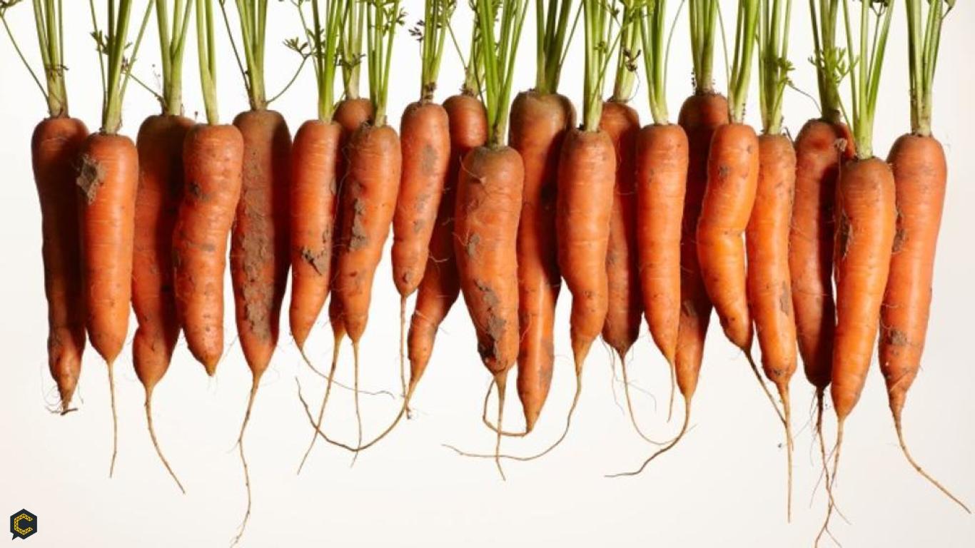 Con agentes vegetales construya rápido, seguro y con menos emisiones de CO2