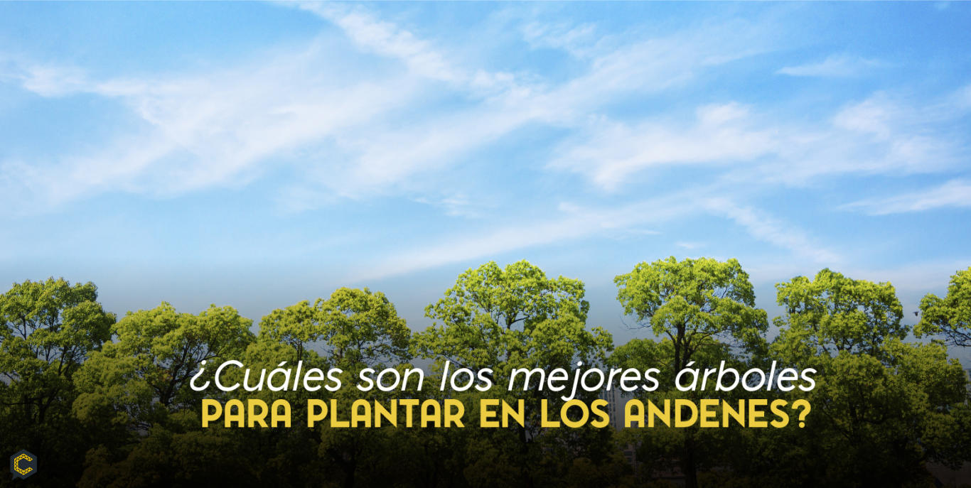 ¿Cuáles son los mejores árboles para plantar en los andenes?