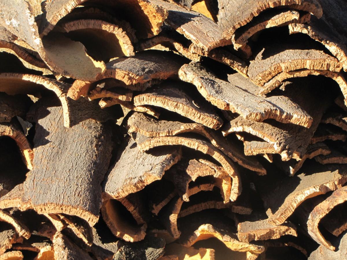 El corcho, un material para la construcción sostenible