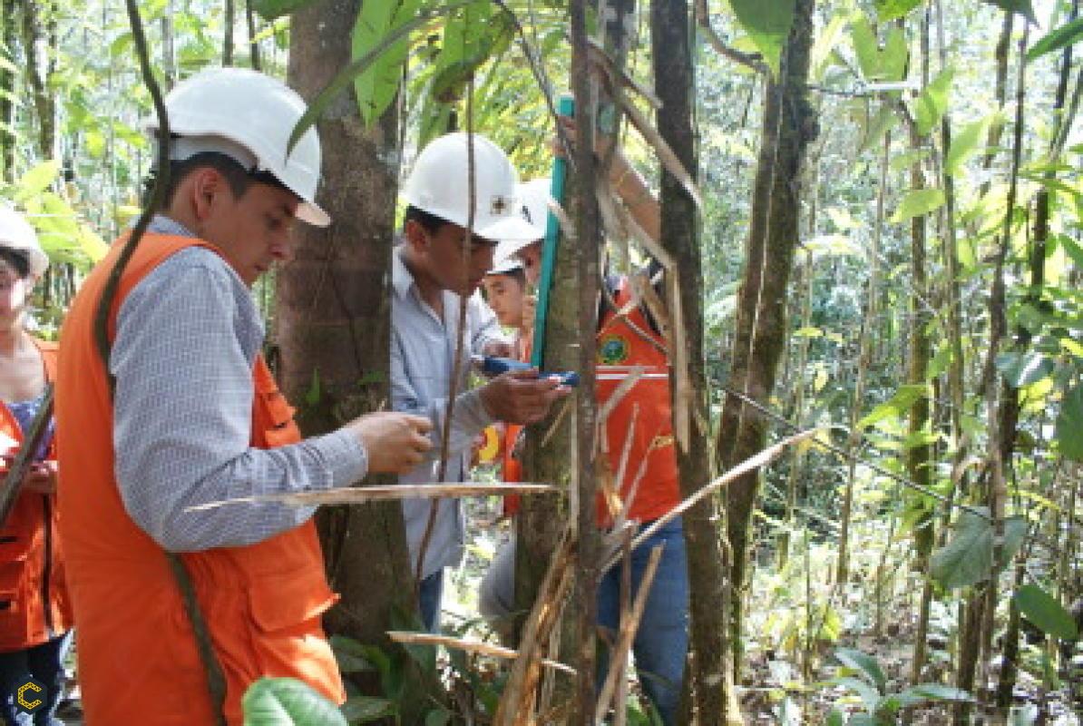 Se requiere un Ingeniero Forestal y Biologo con experiencia en planes de manejo ambiental y planes de compensación