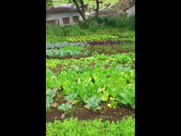 Sistemas Alimentarios con Enfoque Agroecológico / Diplomado